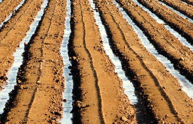 Sistemele de irigatii au ajutat egiptenii in perioadele de seceta