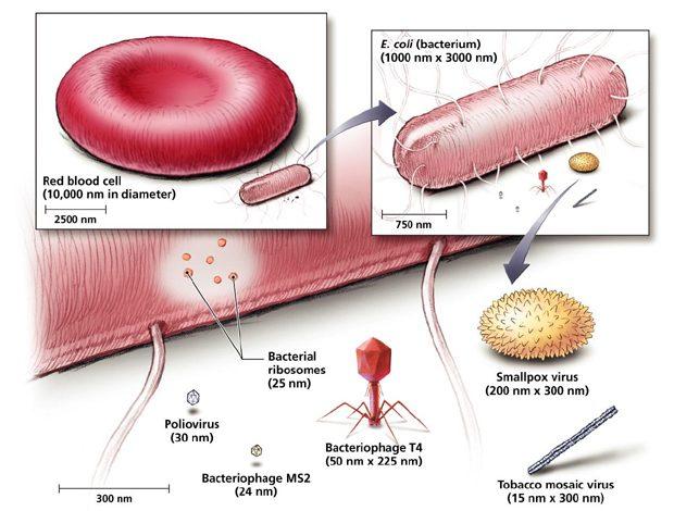 Cum arata variola corpul uman
