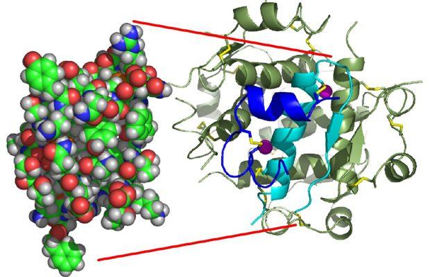 Structura chimica a insulinei